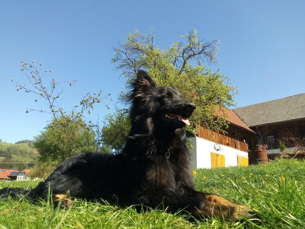 Emmi, der Hund vom Kleinortbauer